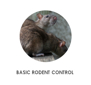 BASIC RODENT CONTROL